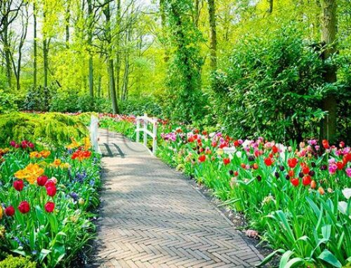 شركة تنسيق حدائق دبي |0567376923|فني تنسيق حدائق