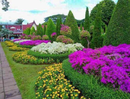 شركة تنسيق حدائق ابوظبي |0567376923|تنفيذ حدائق
