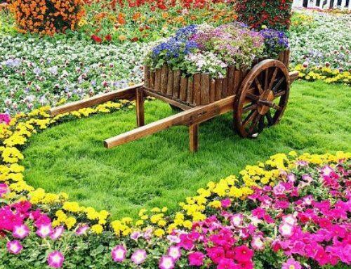 شركة تنسيق حدائق الفجيرة |0567376923|فني تنفيذ حدائق